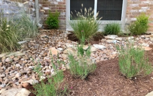 Close up view of newly placed landscaping in yard