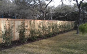 New fence line built with plants lining the interior
